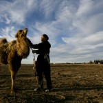 Herder talks to baby camel
