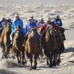 Camel racing in the Gobi Desert