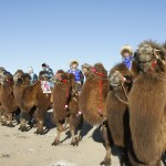 Camel race start line in the Gobi Desert