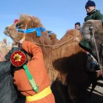 Preparing camel for the festival